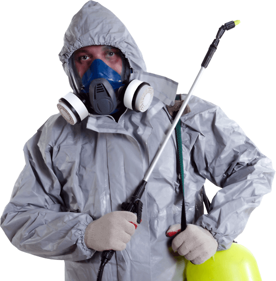 Domestic Pest Control London