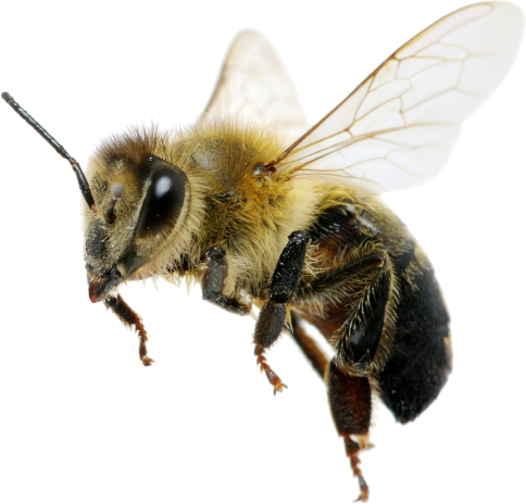 Bee Removal London