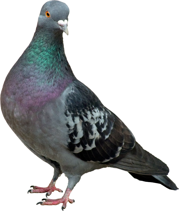 Bird Control Services London