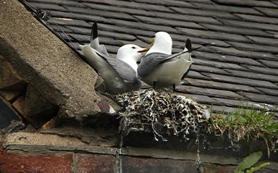 Birds in their nest