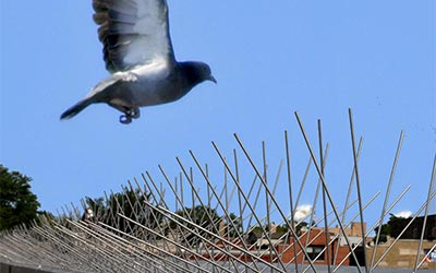 Bird Proofing Services London