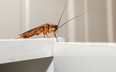 Cockroach Treatment Services London