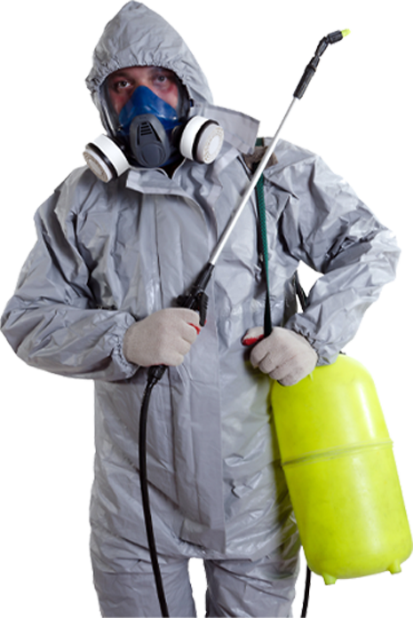 Insect Control Services in London