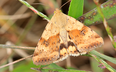 Moth Pest Control in London