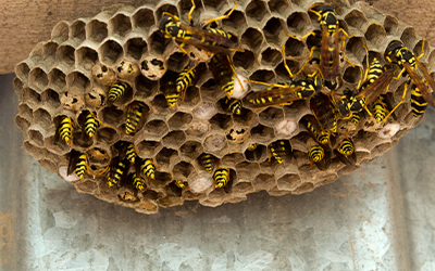 Wasp and Bee Removal Services London